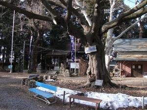 200220おとぎの桜