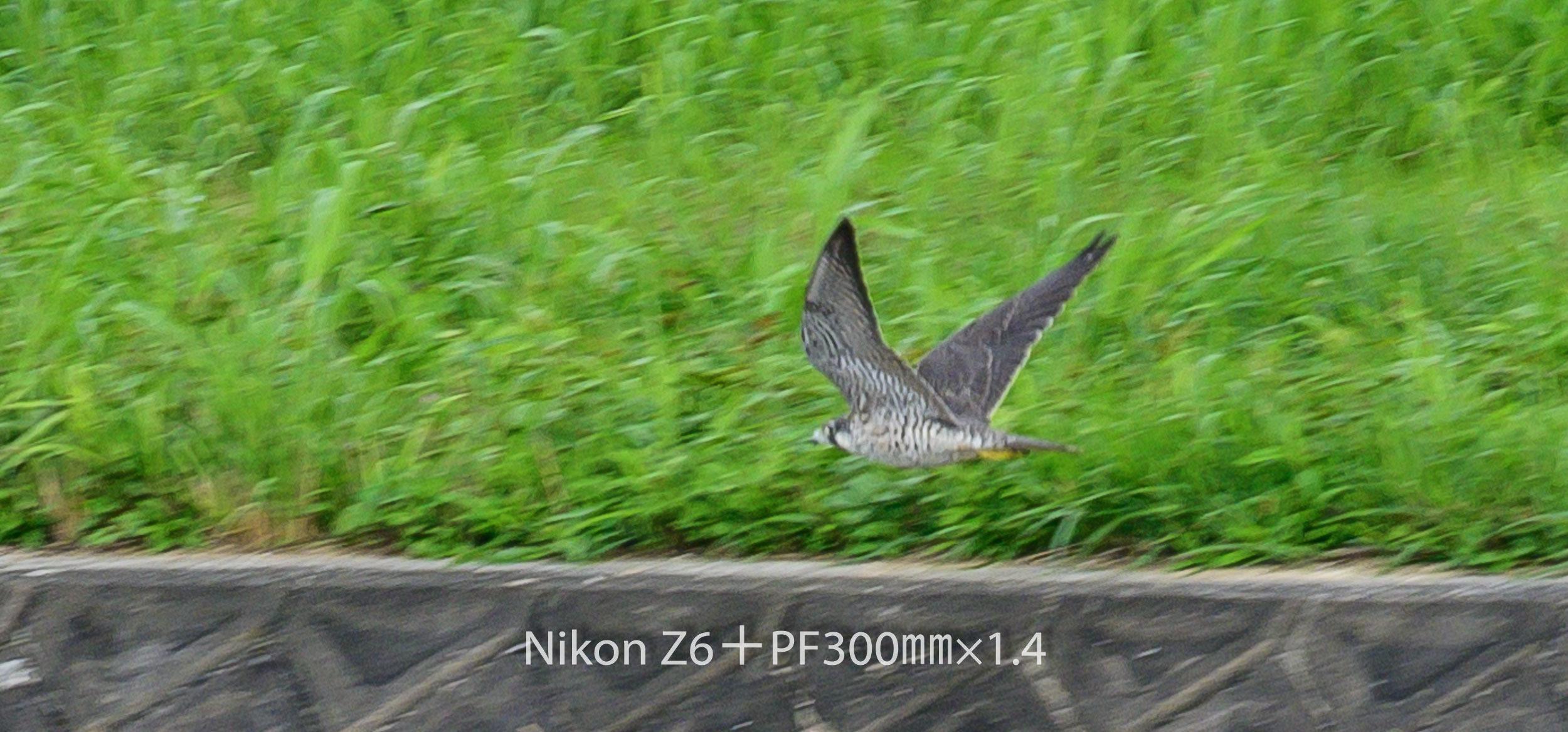 191007 ハヤブサ-01 NIKON Z 6 ISO 560 420 mm 1385 x 646