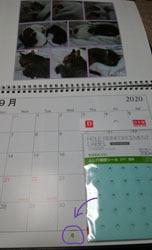 200110 猫カレンダーに