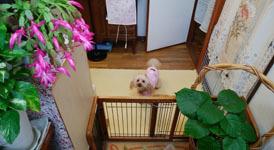 200112 待ち犬