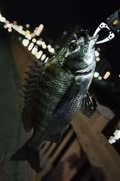 小名木川038