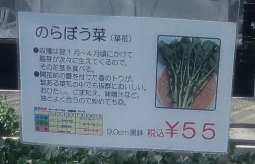 20200117_のらぼう菜3