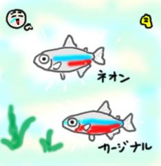neon-kajinaru2.jpg