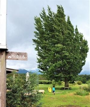 2020 9月 きっくん 木