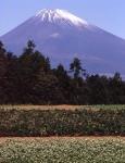 2.富士山-28P 93qt