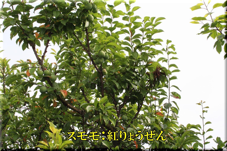 1beniryou200530_064.jpg