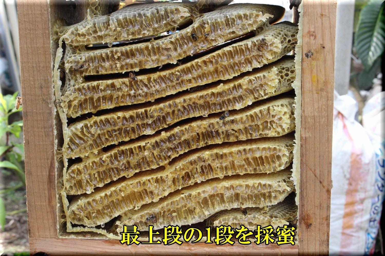 1hatimitu200607_003.jpg
