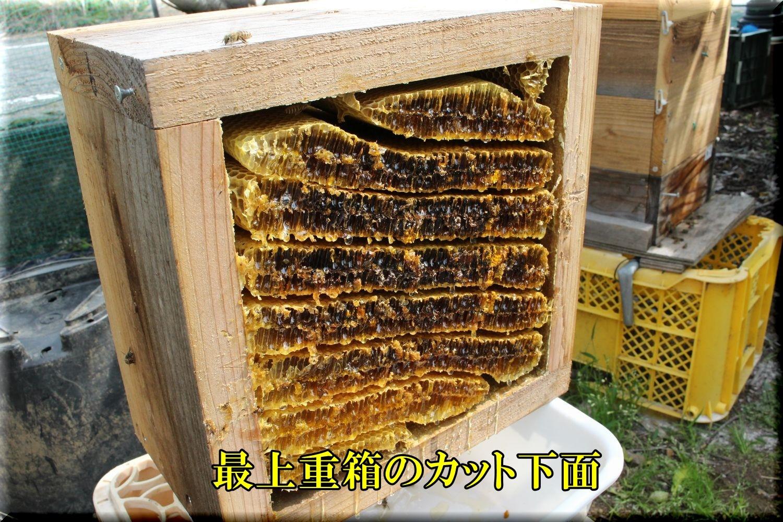 1hatimitu200607_006.jpg