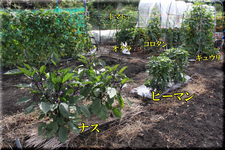 1kakusyuyasai200623_018.jpg