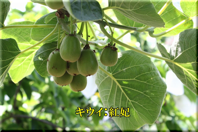 1kouhi200605_035.jpg