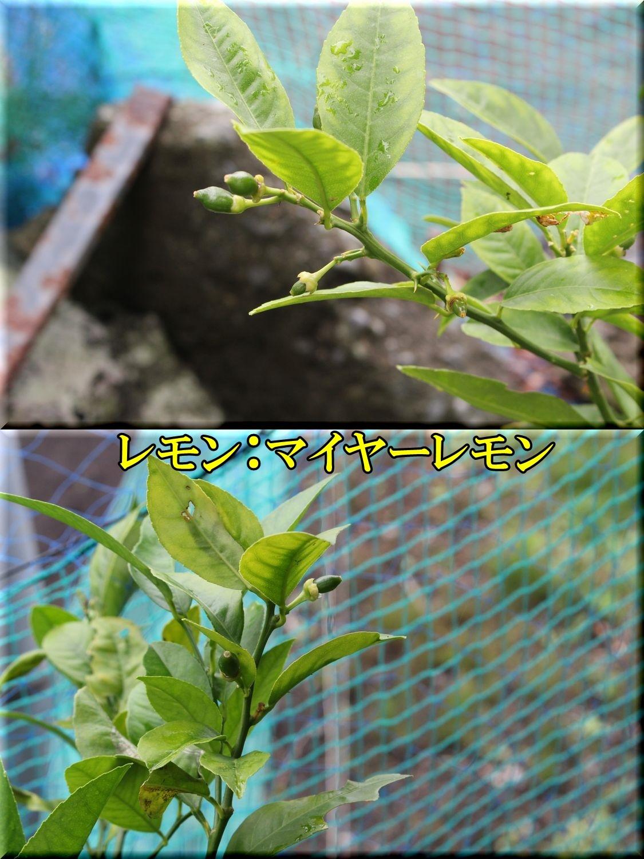 1miyer200612_010.jpg