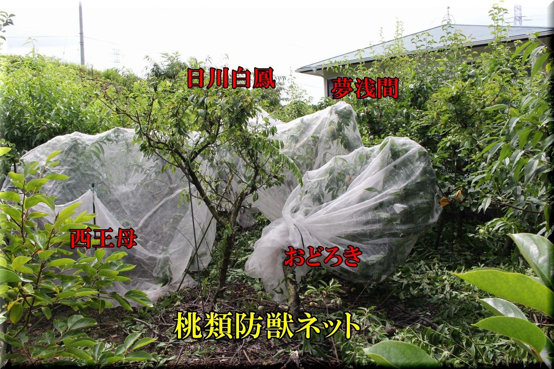 1momo200629_004.jpg