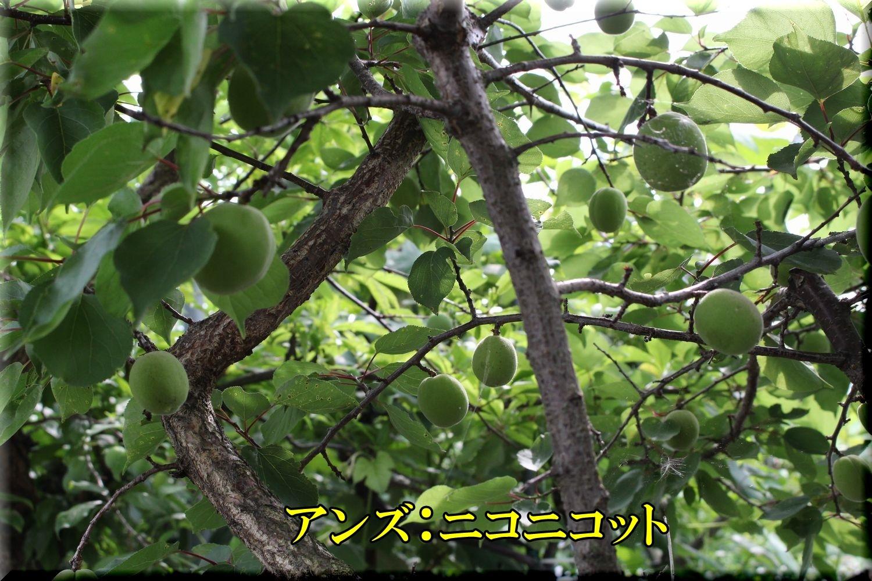1niconico200530_053.jpg