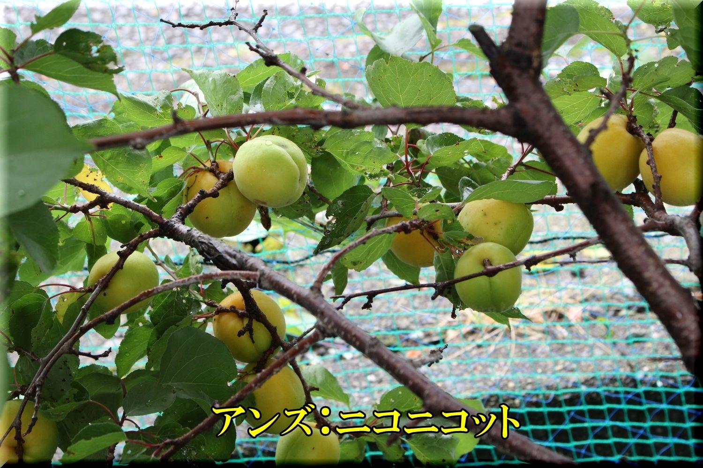 1niconico200612_005.jpg