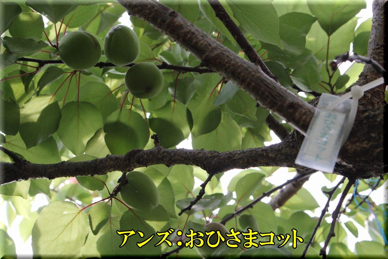 1ohisama200530_060.jpg