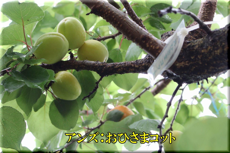 1ohisama200612_004.jpg