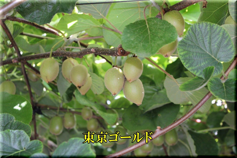 1tokyouG200629_028.jpg