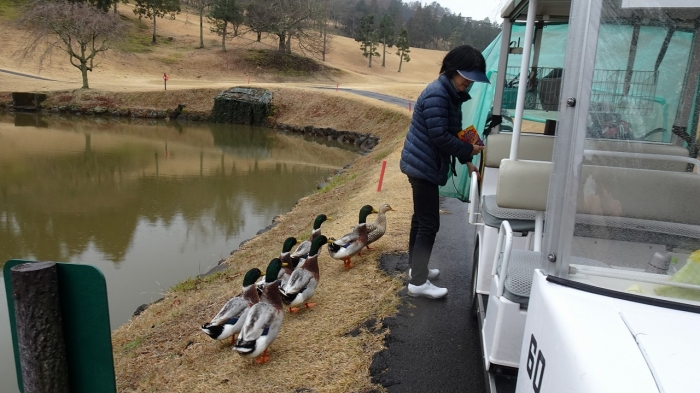 ゴルフ (7)