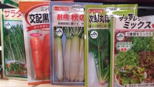 今年の冬野菜