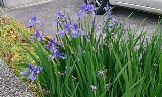flowers@20200526001.jpg