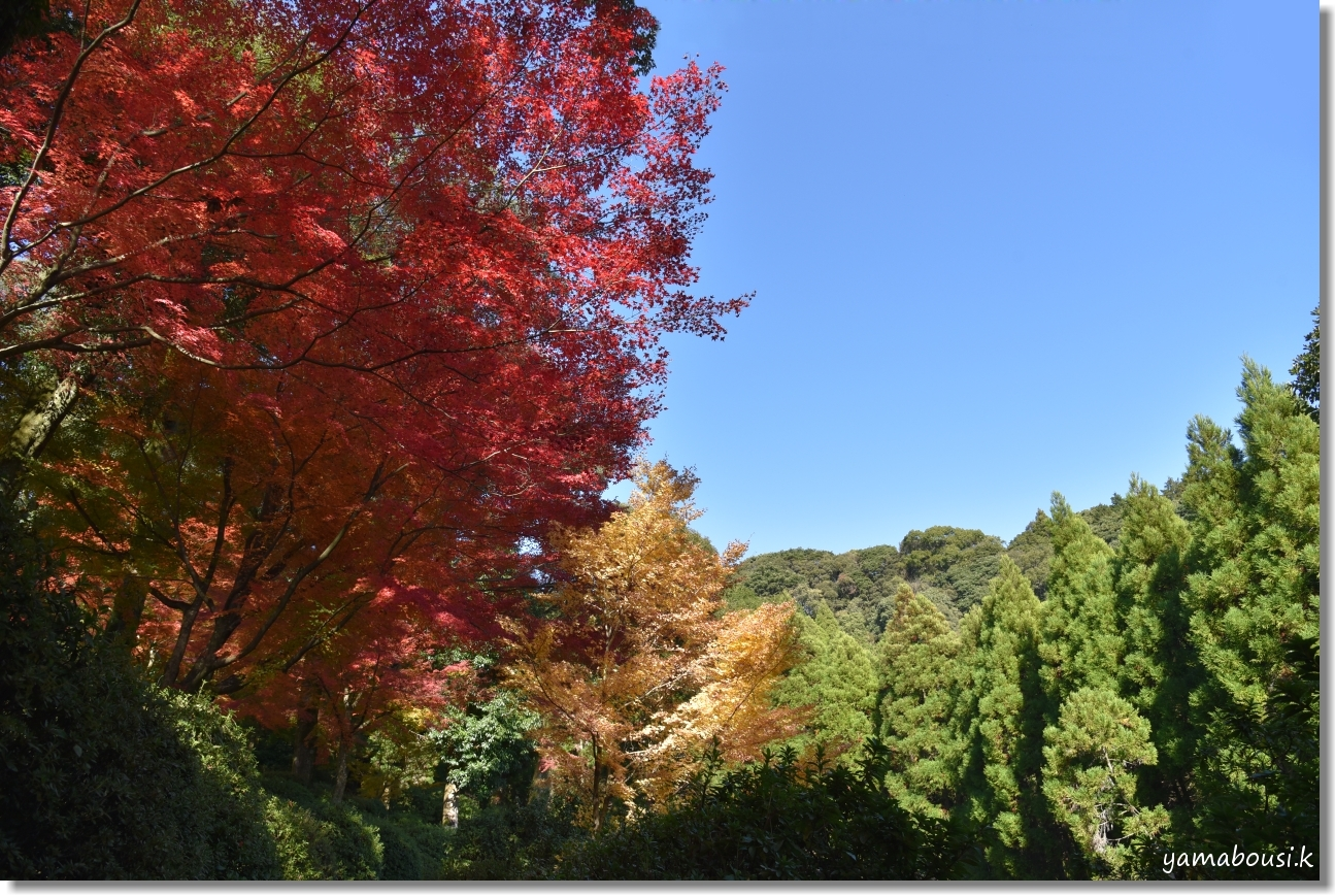 大興善寺(2019)紅葉の彩 6