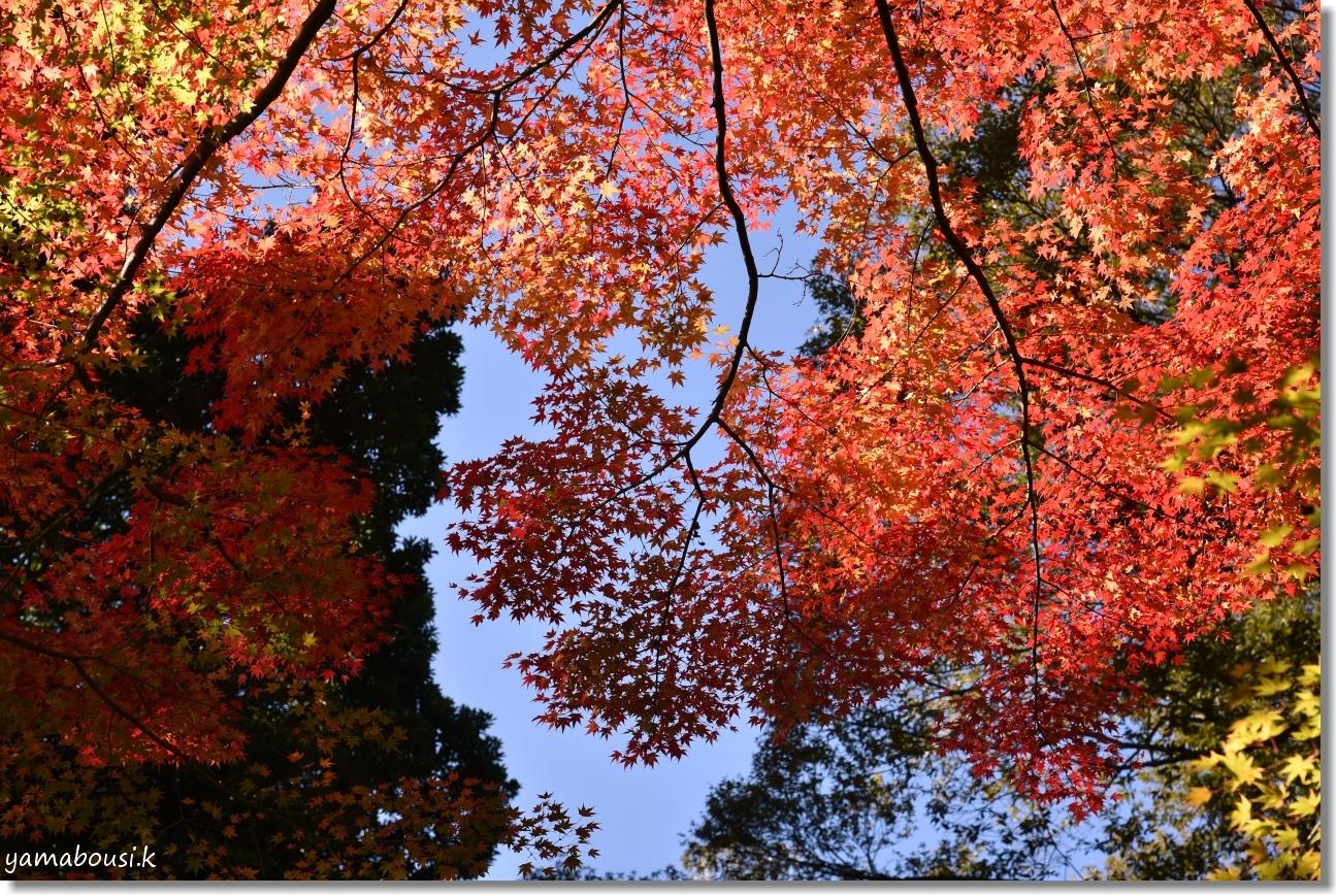 大興善寺 透かし紅葉の輝き