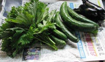野菜野菜IMG_0115