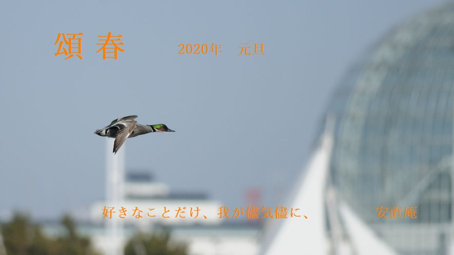 yosigamo5871-2020.jpg