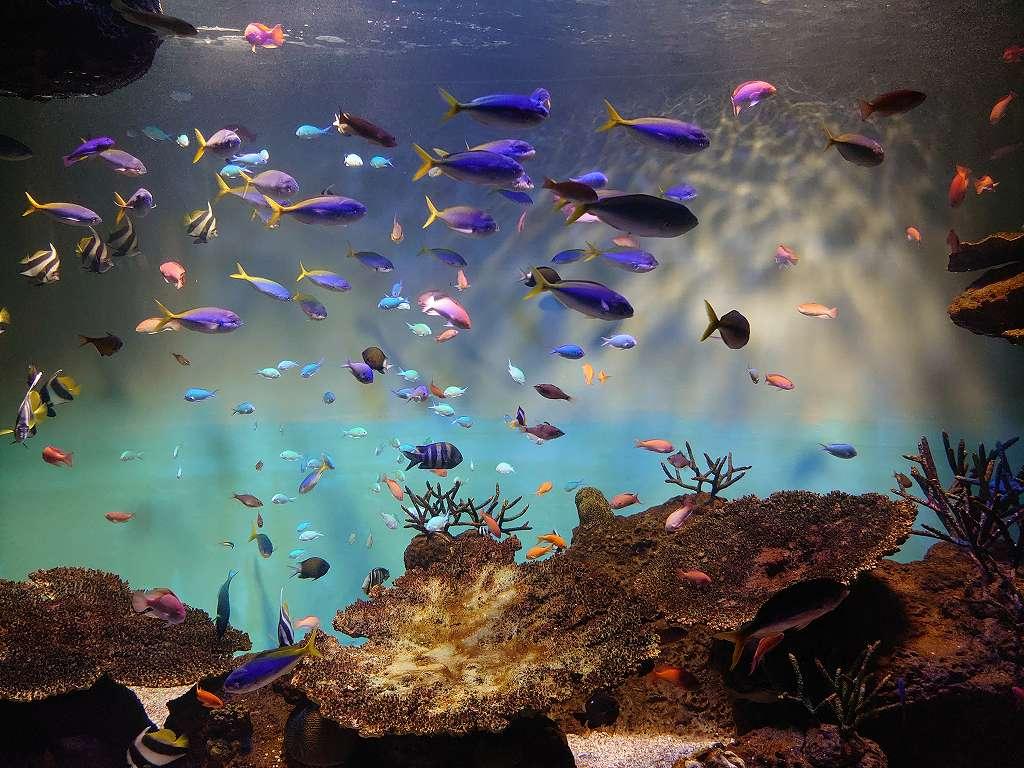 「宮島水族館(広島県廿日市)」美しい展示と!ふれあい&ショー&バックヤードツアー