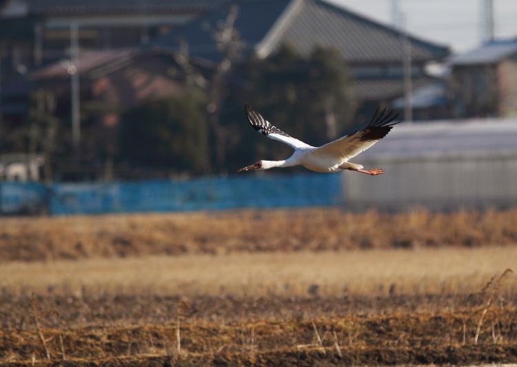 IMG_5209ソデグロ離陸中