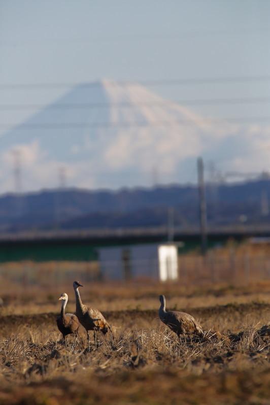 0N8A7169遥かに富士山