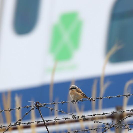 0N8A5581新幹線グリーン乗車