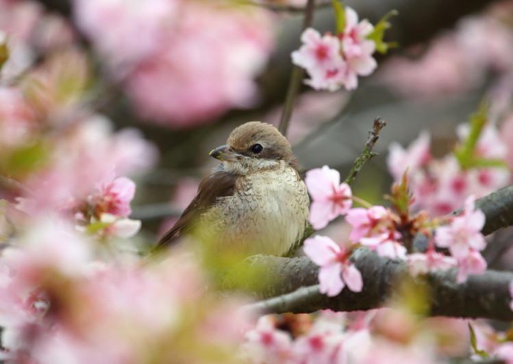 2D7A0342桜の小窓から