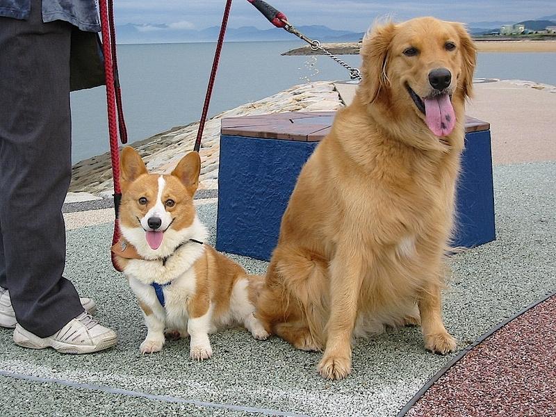 2003年プリンとジェン