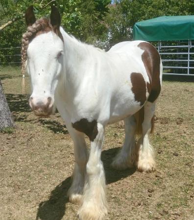 20200601おさげ馬3