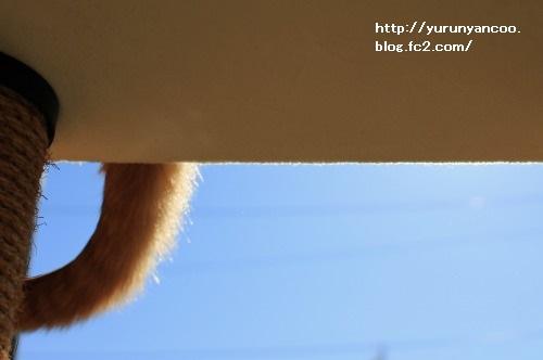 ブログNo.1716(1月29日午後キャットタワーと青空①)4