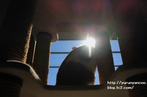 ブログNo.1716(1月29日午後キャットタワーと青空①)5