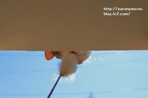 ブログNo.1716(1月29日午後キャットタワーと青空①)7