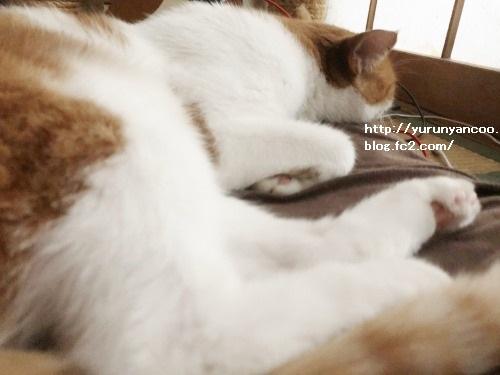 ブログNo.1637(台風の朝の猫)1