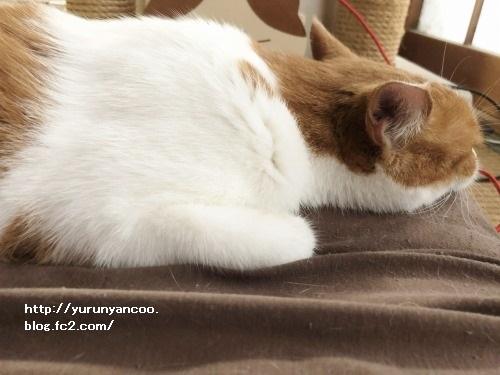 ブログNo.1637(台風の朝の猫)2