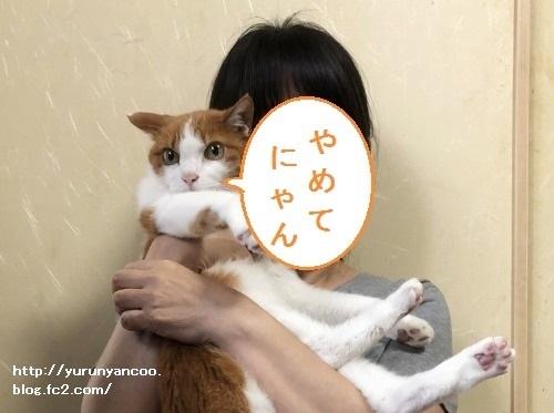 ブログNo.1644(抱っこ、迷惑?)5