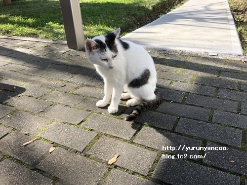 ブログNo.1659(張り付き猫&癒し猫)12