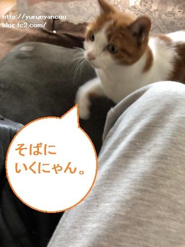 ブログNo.1647(深い愛情)10