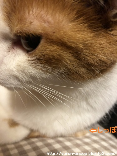 ブログNo.1679しっぽ&おまけ(Xmasツリー)5