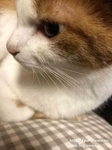 ブログNo.1679しっぽ&おまけ(Xmasツリー)6