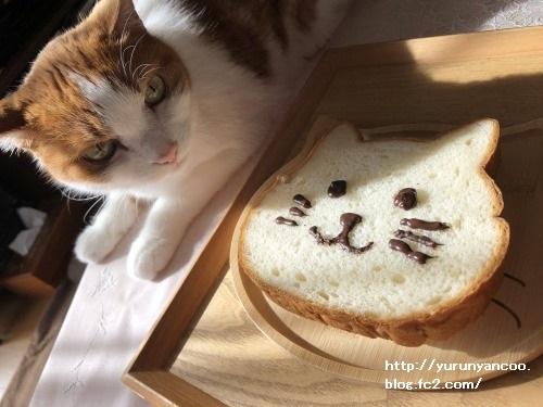 ブログNo.1706(美味しくて可愛いねこねこ食パン)9