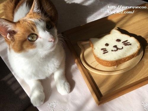 ブログNo.1706(美味しくて可愛いねこねこ食パン)11