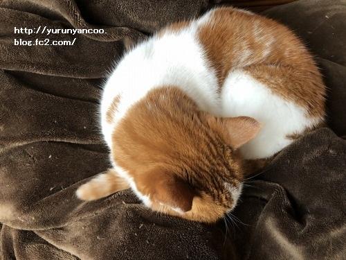 ブログNo.1711(猫をダメにする?)5